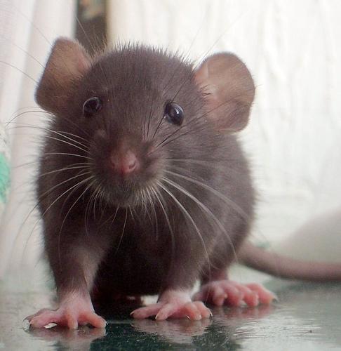 rat.2.20.04