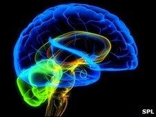 _45690145_f0013613-the_human_brain-spl
